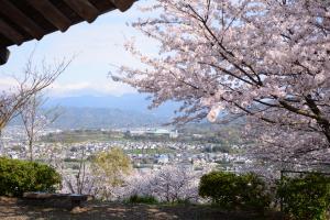 金毘羅公園から見える桜越しの町並み